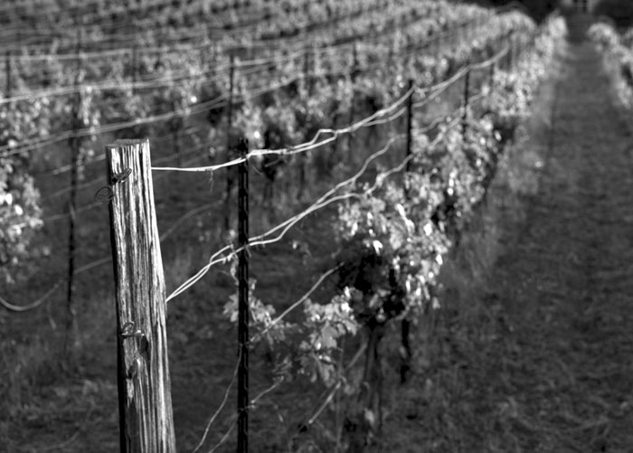 Image of end post at Kathryn Kennedy Winery